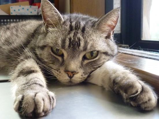 猫20190804 013