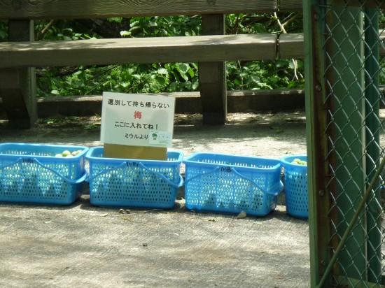 本沢梅園 004