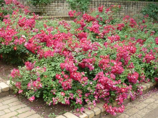 これだけ密集して咲いていると小さい花も目立ちますね