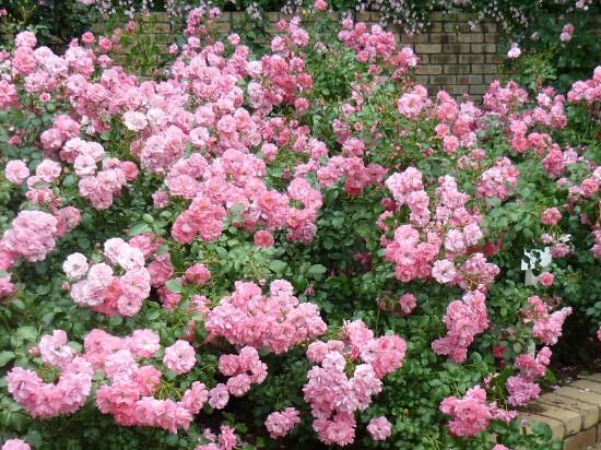 個人的にはピンクで小さい花が好きです