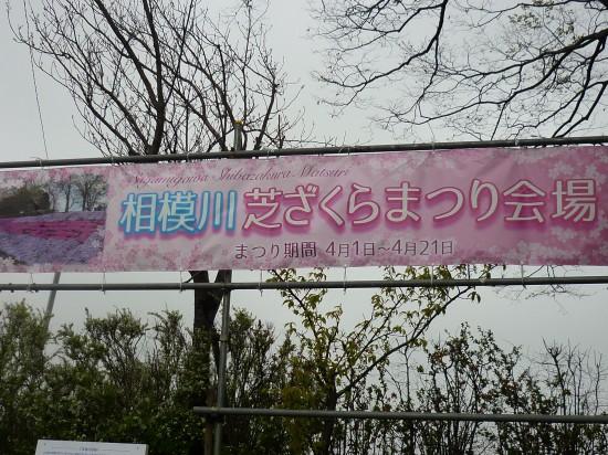 芝桜2019 001