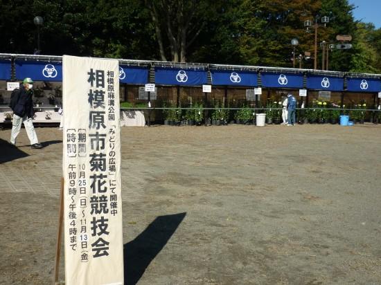 菊花競技会2020 002